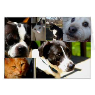 Congratulations on Adopting (animal, Pets) Card