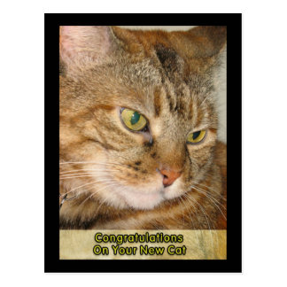 congratulations on Your new cat Postcard