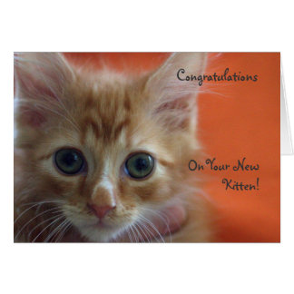 Congratulations on Your New Kitten Card