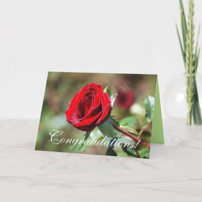 congratulations red rose card p137409446049111992b2wgi 400 - Vampire yaar
