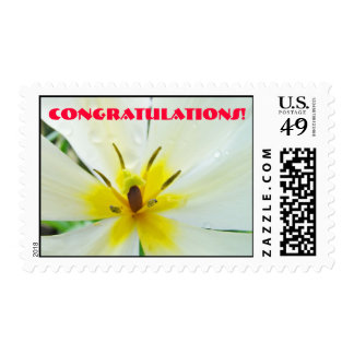 Congratulations! stamps White Yellow Tulip Flower