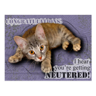 Congratulations! You're being neutered! Post Card