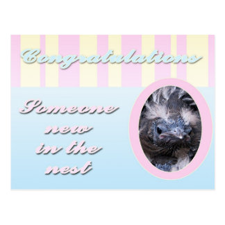 Congratutions on you new baby girl or boy postcard