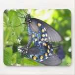 Congress, Arizona Pipevine Swallowtail Butterfly Mouse Pad