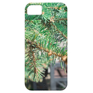 Conifer branch at the city street iPhone SE/5/5s case