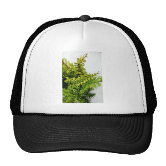 conifer mesh hats