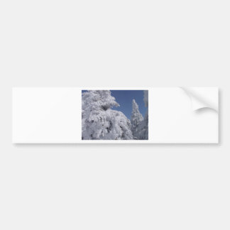Conifer trees plastered with snow bumper sticker