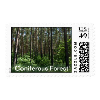 Coniferous Forest Beauty Of Nature Stamp