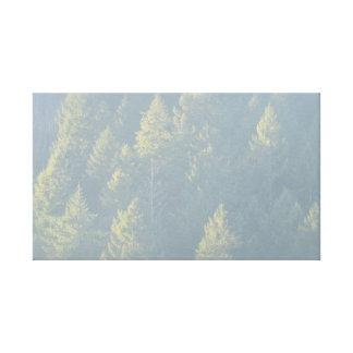 Conifers Canvas Print