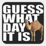 Conjetura qué día es pegatinas del camello del día calcomania cuadradas