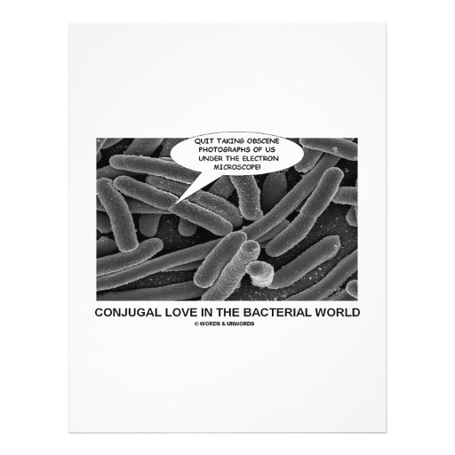 Conjugal Love In The Bacterial World Full Color Flyer
