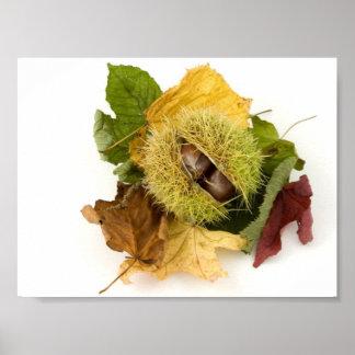 Conker dulce con las hojas póster