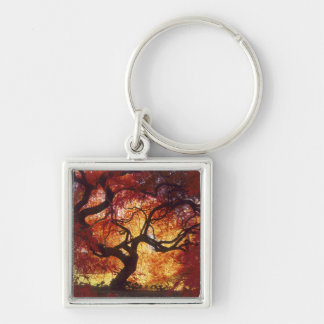 Connecticut: Darien, Japanese maple 'Acer Silver-Colored Square Keychain