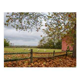 Connecticut Fall Farm Postcard