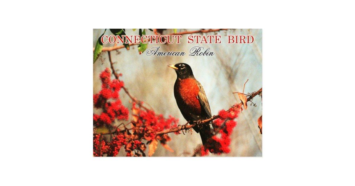 connecticut state bird