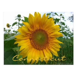 Connecticut Sunflower Postcard