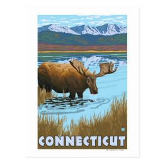 ConnecticutMoose Drinking in Lake Postcard