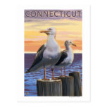 ConnecticutSea Gulls Scene Postcard