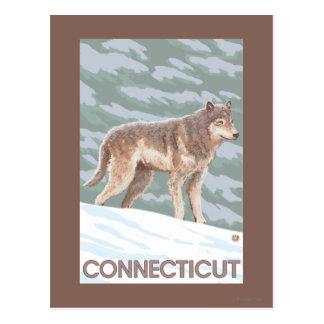 ConnecticutWolf Scene Postcard