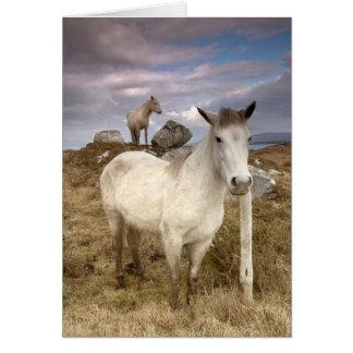 Connemara Ponies Card
