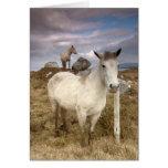 Connemara Ponies Greeting Card