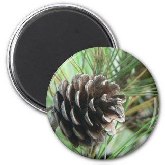 Cono de la conífera imán redondo 5 cm