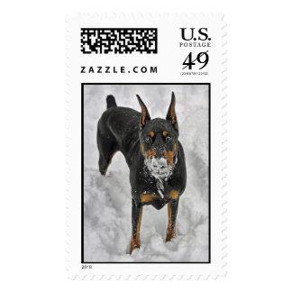 Cono de la nieve del Doberman Sellos Postales