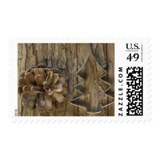 Cono del pino con el cortador de la galleta para sellos
