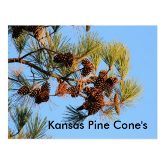 Cono del pino de Kansas con la POSTAL del cielo az