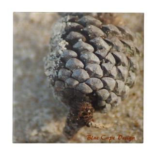 Cono del pino de la playa azulejo ceramica