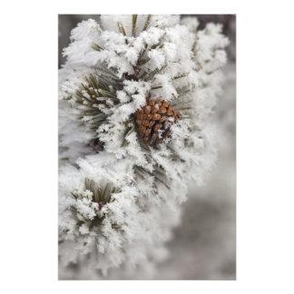 Cono del pino de Lodgepole en invierno en Yellowst Cojinete