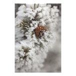 Cono del pino de Lodgepole en invierno en Yellowst Fotografias