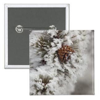 Cono del pino de Lodgepole en invierno en Yellowst Pin Cuadrada 5 Cm
