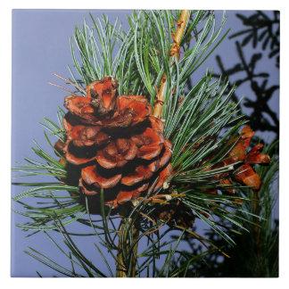Cono del pino en rama del pino azulejo cuadrado grande