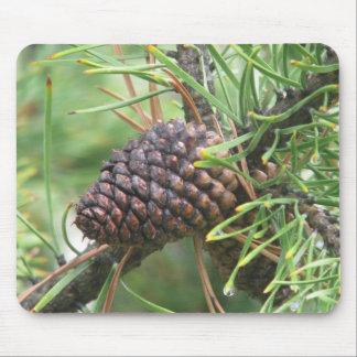 Cono del pino en Yellowstone Alfombrilla De Ratón