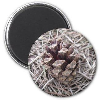 Cono del pino y agujas del pino imán redondo 5 cm