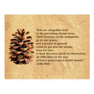 Cono del pino y cita de John Muir Tarjetas Postales