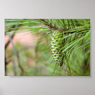 Cono largo verde del pino de la hoja póster