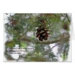 Cono minúsculo del pino: Cada paseo w/nature… John Tarjetón