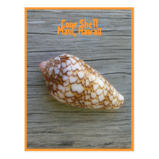 Cono Shell Postales
