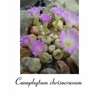 Conophytum chrisocruxum shirt