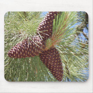 Conos del pino, área del lago Tahoe Tapete De Ratones