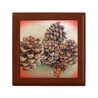 Conos del pino cajas de regalo