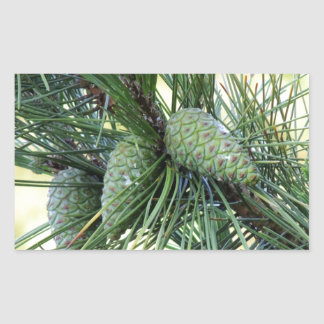 Conos del pino del día de fiesta pegatina rectangular