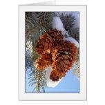 Conos del pino del invierno - por Cynthia Wenslow Tarjetón