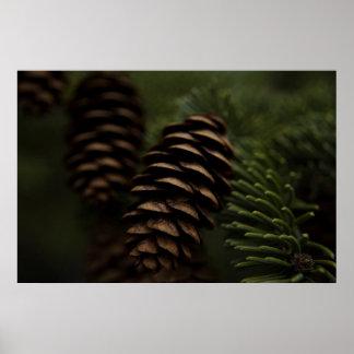 Conos del pino en la fotografía de la naturaleza póster