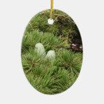 Conos del pino ornamento de navidad