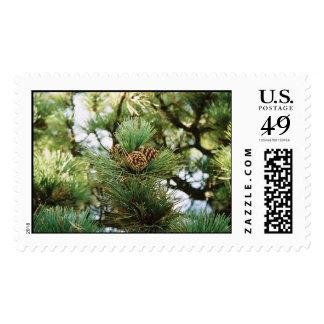 Conos del pino sello postal