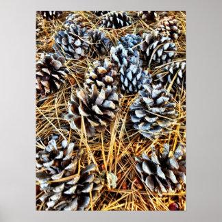 Conos del pino y poster de las agujas del pino