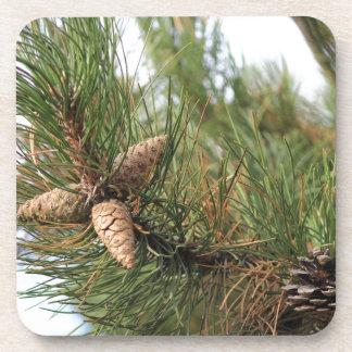 Conos verdes del pino posavaso